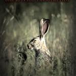 mr bunny copy